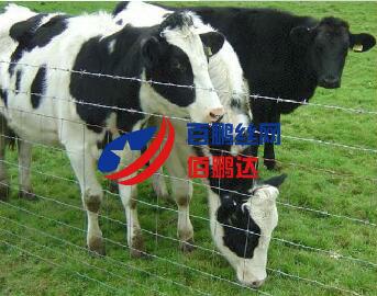 牛栏网厂家