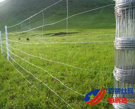 养鹿围栏网